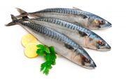 pescados-y-mariscos-10